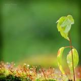 микро лес