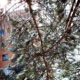 Арсеньев в снегу