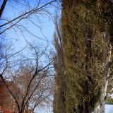 Лето, осень и зима в одном снимке -Арсеньев, ул. Ломоносова