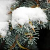 Арсеньев - Город в снегу